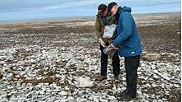 ii-archeologists-img_7415_b