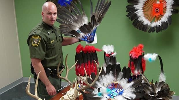 A Fish and Wildlife officer poses with eagle headdresses seized after a six-month investigation in the Fort Macleod area.