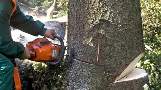 The forestry sector helped boost job growth in B.C. in June, the government says.