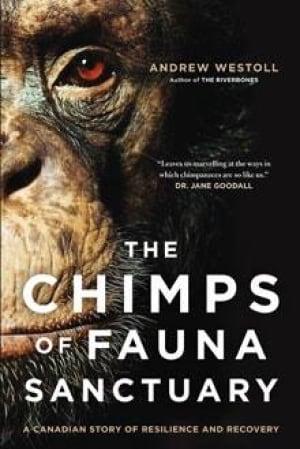 chimp-book-cover