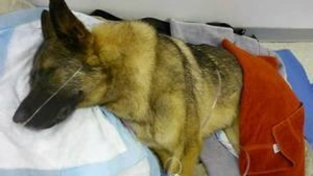 hi-bc-120719-rescued-dog-4col