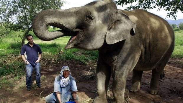 Meena, a 12-year old elephant, is part of a herd of 20 elephants that eat coffee beans mixed with fruits, and their excrements are used for a new blend of coffee.
