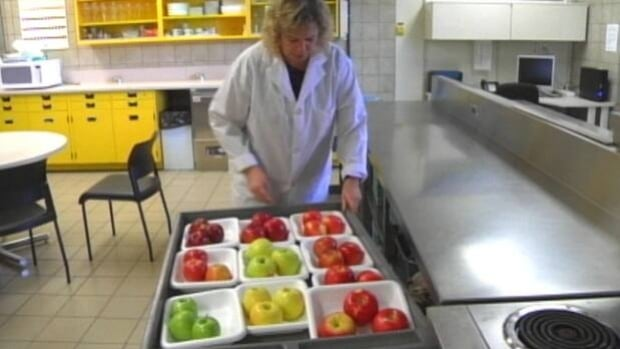 Examining different varieties of apples at the Pacific Agri-Food Research Institute in Summerland, B.C.