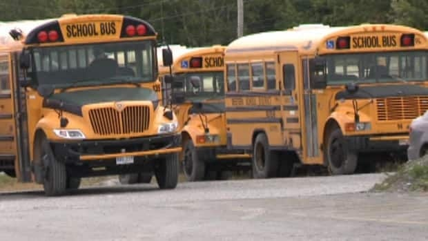 School buses in Newfoundland and Labrador will run regularly on Wednesday, private operators say.
