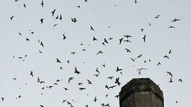 Hydro One is blaming birds for weeks of power interruptions in the McGregor area.