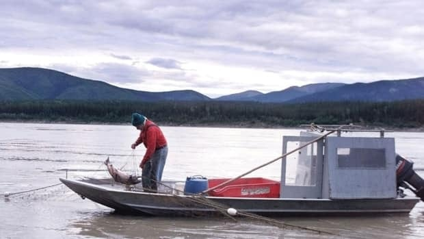 The Yukon River, pictured above with a salmon fisherman in 2001. The Alaska Board of Fish has voted to allow dip net fishing on the lower Yukon and Kuskokwim River systems to all subsistence harvesters, who will have to release chinook salmon back to the river unharmed.