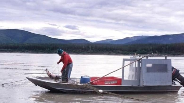 Alaska bans king salmon fishing on prime rivers | CBC News