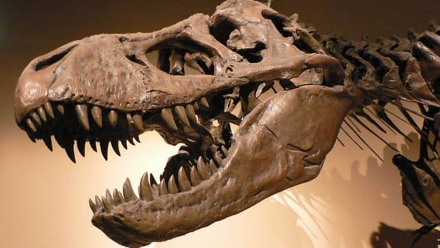 hi-852-tyrannosaurus_rex_p1050042-david-monniaux