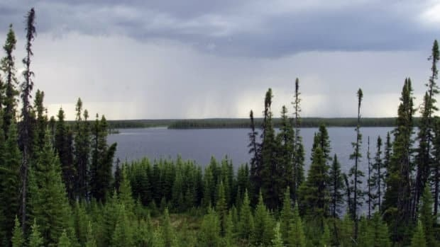 The International Boreal Conservation Science Panel is calling the preservation of half of Canada's 5.8-million square kilometre Boreal Forest.