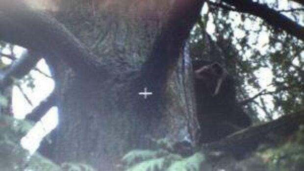 hi-bc-121031-bear-tree-4col