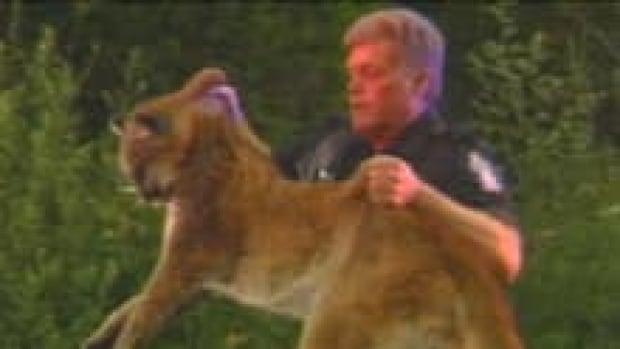 hi-bc-120817-cougar-attack-conservation-kill-3col