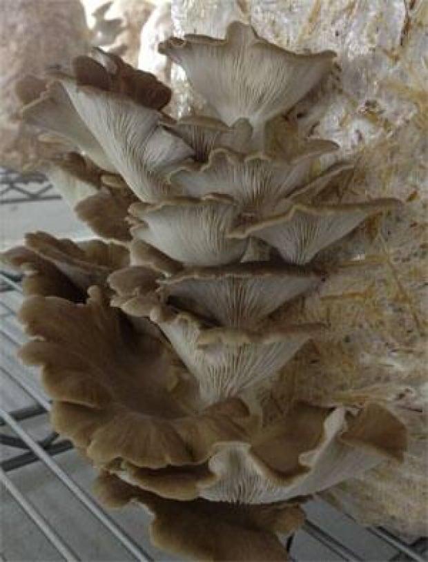 mi-mushrooms-2