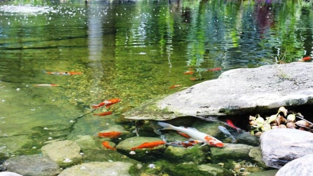 Waterloo Region's first ever pond and garden tour is taking place this weekend. Organizer Denise Wamsley says ticket proceeds will go to building a waterfall feature for one local non-profit agency.