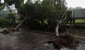 mi-typhoon-tree-cp-rtr358v2