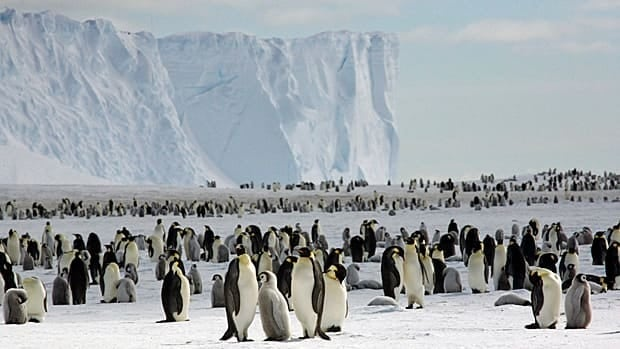Some scientists predict the population of emperor penguins will fall by roughly half in the coming decades, says scientist Peter Fretwell.