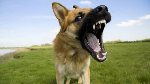 Dogs Will Bark