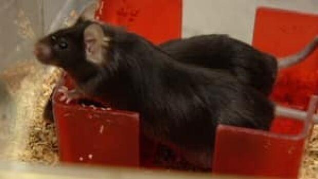 ns-mice-frailty-4col
