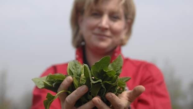 Sandy Morden of Morden's Organic Farm shows off some organic Arrowhead spinach.