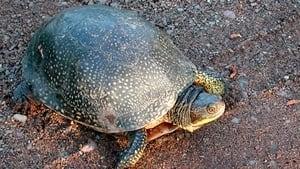 mi-turtle-300-wikipedia