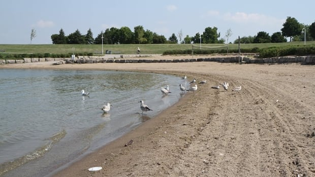 Student scientists at the University of Windsor call for improved water testing at Windsor and Essex County beaches.