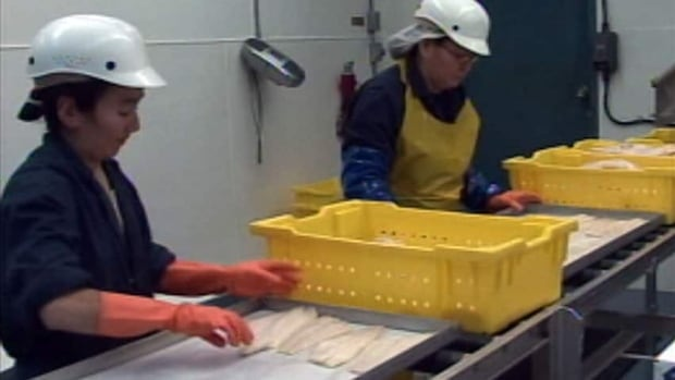 Workers at Pangnirtung's fish processing plant. Nunavut's Inuit fisheries want to access the $35 million annual federal Aboriginal Fisheries Strategy, which is restricted to groups without settled land claims.
