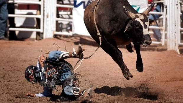 Chad Besplug, from Claresholm, Alta., comes off Kish This during bull riding rodeo action at the Calgary Stampede on July 7.