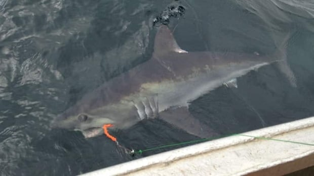 hi-shark-thumbnail-852