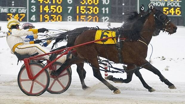 Hamilton-area equine specialists say the provincial government's decision to end the Slots at Racetracks program has done immense damage to the horse industry in Ontario.