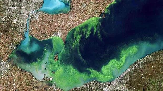 wdr-620-blue-green-algae