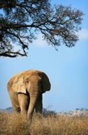 si-toronto-elephants-cp0295