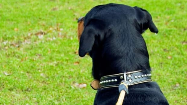 Thunder Bay city council recently decided not to look at putting limits on pets.