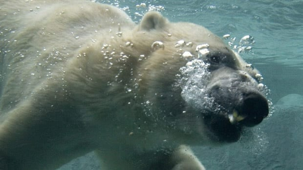 Mayor Rob Ford says he favours selling the Toronto Zoo, which draws 1.3 million visitors annually. The facility is home to 5,000 animals, including several polar bears.
