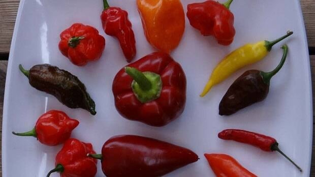 Keith Galley grows some of the world's hottest peppers from his home in Kanata.