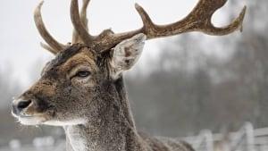 hi-deer-852