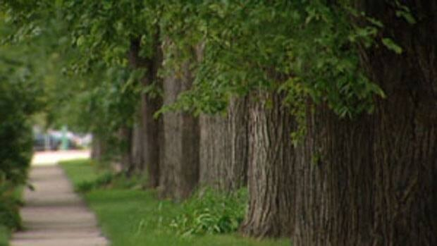 Winnipeg's forester, Martha Barwinsky, says a recent inventory of elm trees, which has only dealt with half the city, puts it on track to be the city with the most elm trees in North America.