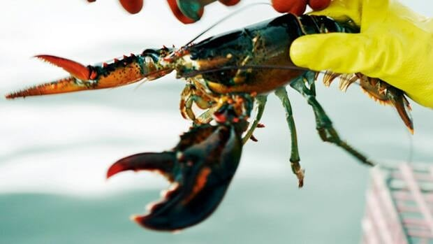 The federal Fisheries Department said $4.1 billion worth of Canadian seafood landed on tables in more than 100 countries last year, with lobster remaining the most valuable export.