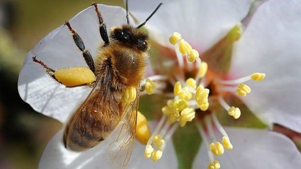 hi-bees-cp-00960415