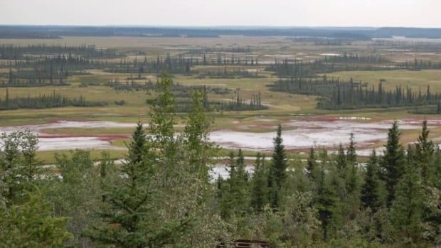 The salt plains in Wood Buffalo National Park were among the reasons it was granted World Heritage status by UNESCO in 1983. The Mikisew Cree First Nation is now asking the UNESCO to put the park on its list of endangered world heritage sites.