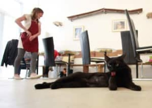 Vienna's first cat cafe