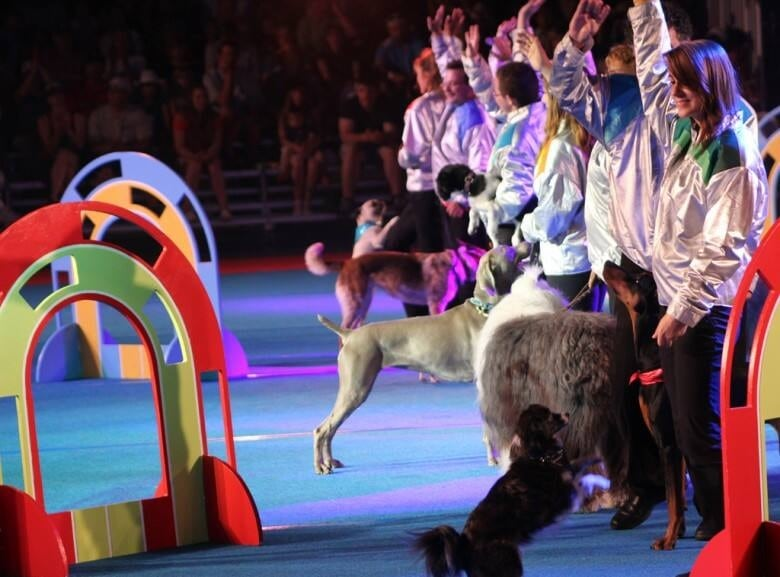 Calgary Stampede cancels Superdogs in favour of U S  company