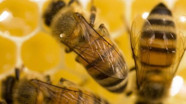 Federal regulators say 'current agricultural practices related to the use of neonicotinoid treated corn and soybean seed are not sustainable,' but some beekeepers call the tighter rules for their use a 'Band-Aid' solution.