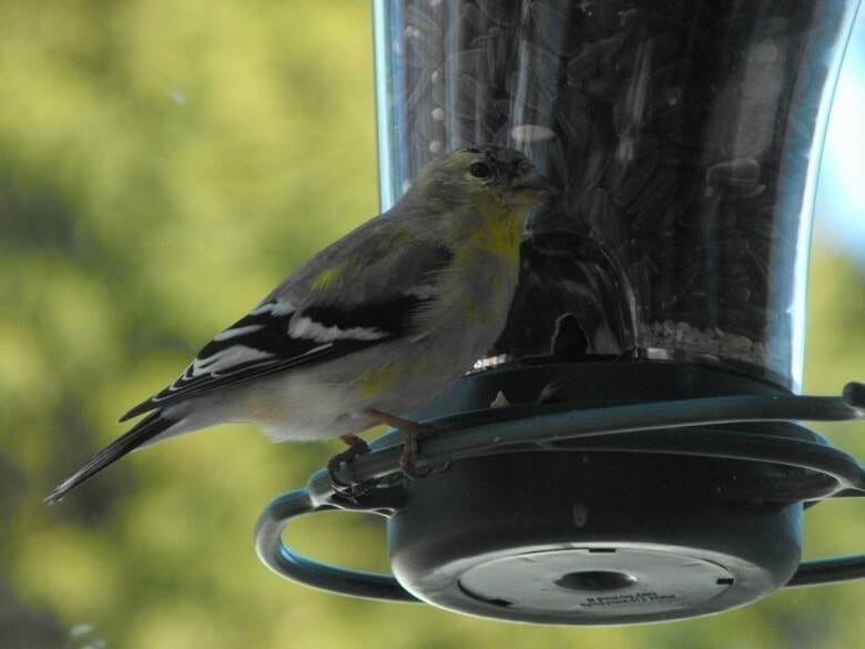 roof bird little feeder yellow select metal dp com amazon bit capacity finch stokes with feeders
