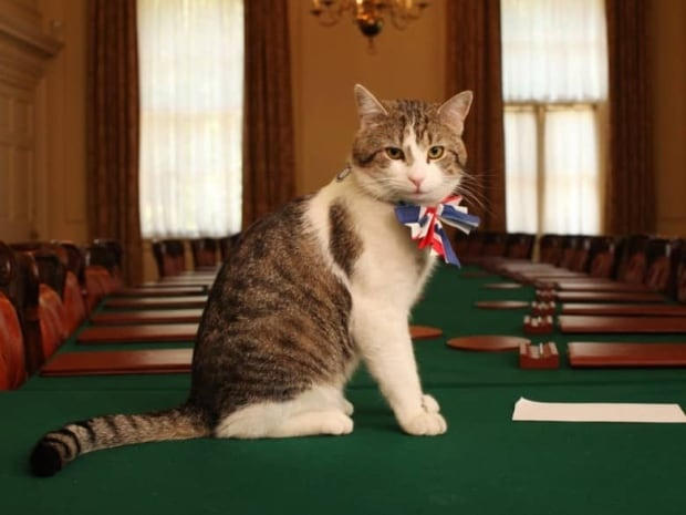 Larry, the Downing Street cat