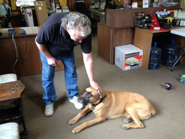 Dog hit with hammer at Hawk Auto and Truck Accessories
