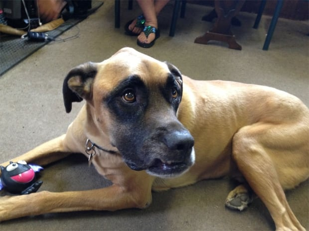 Dog Ozzy hit by hammer in robbery