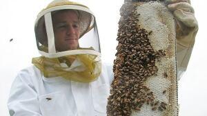 Honey Quality Control