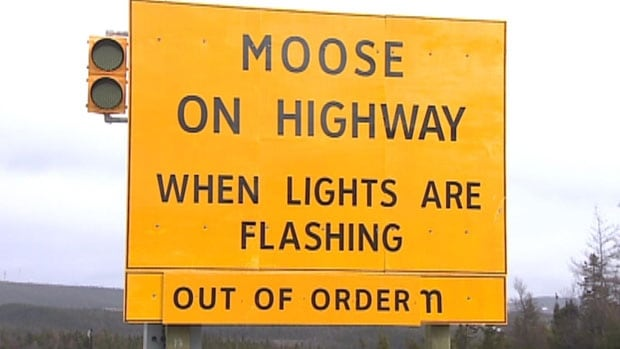 There have been recurring problems with moose-detection systems on the Trans-Canada Highway.
