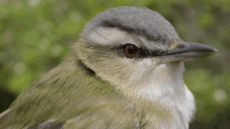 7,500 songbirds killed at Canaport gas plant in Saint John