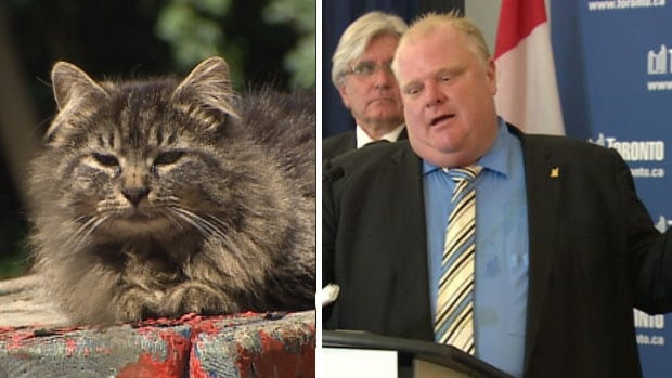 Rescue groups are hoping for Rob Ford's support in caring for Toronto's feral and stray cats.