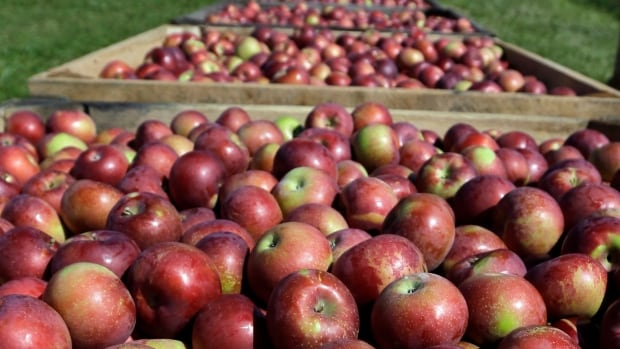 Battlefield Field House Museum and Park in Stoney Creek is hosting the Apple Festival on Saturday.